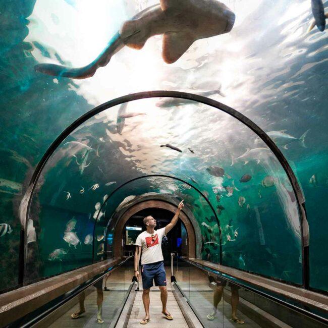 Phuket Aquarium, Phuket, Thailand, Pillingers Adventures